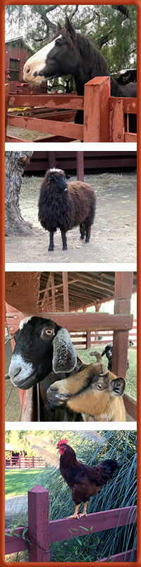 Images of sheep, horse, goats and rooster at RLA